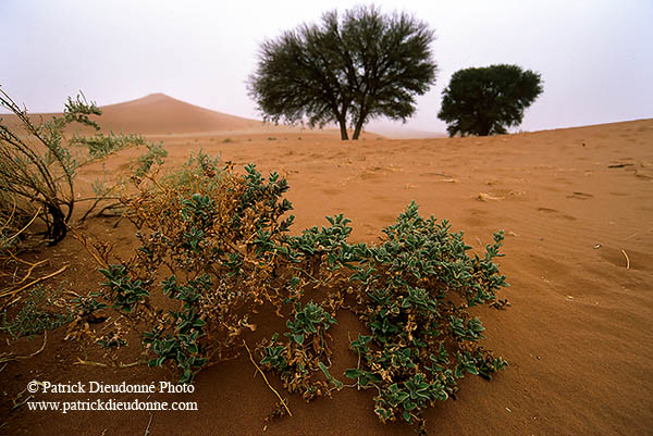 Desert vegetation list
