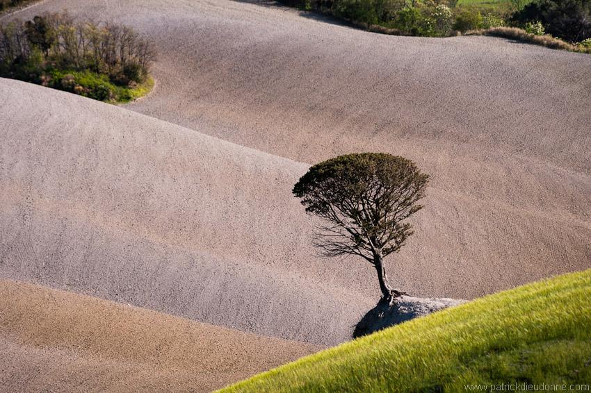 arbre_01