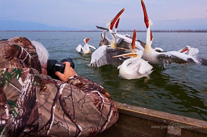 Pélicans frisés sur le lac Kerkini (Grèce) - Photo en bateau
