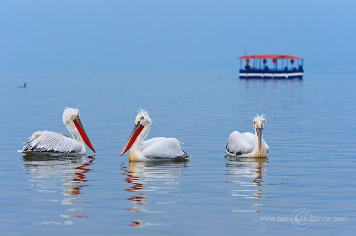 Pélicans et bateau