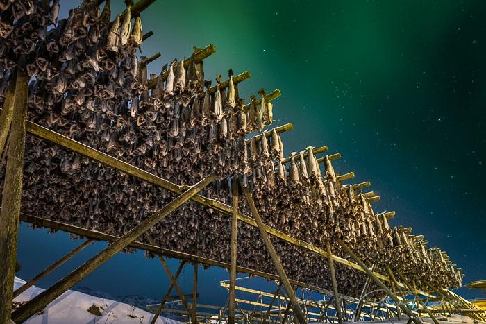 Séchoir à poissons, et aurore boréale, Lofoten. D850, 14-24 mm à 24 mm, 25 s à f4.