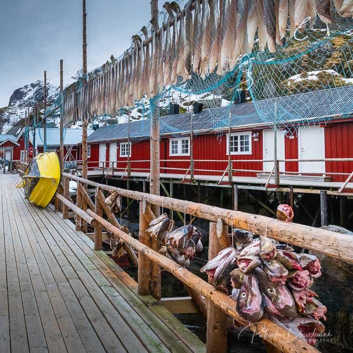 Nusfjord, Lofoten.
