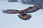 Bulgaria - Eagles 2013 - click