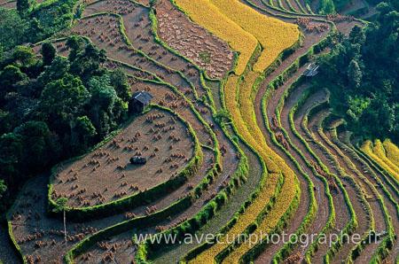 Rizieres dans le nord Vietnam