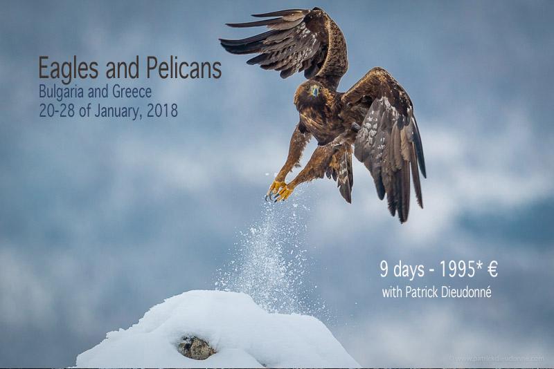 Golden Eagle, Bulgaria