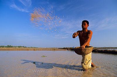 Semailles riz