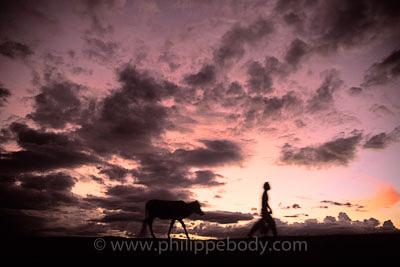 Scènes agricoles, Cambodge