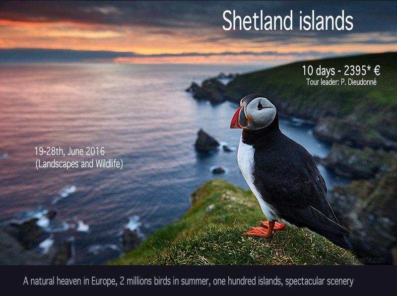 Eshaness cliffs, Shetland