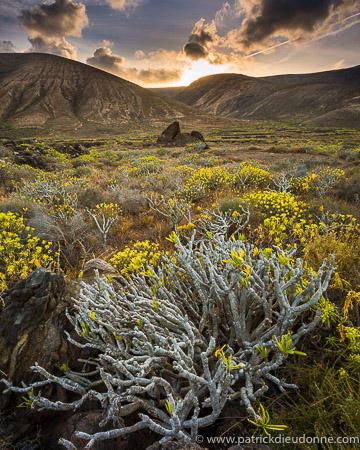 Euphorbes et volcans, Lanzarote