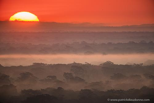 Soleil levant sur la jungle